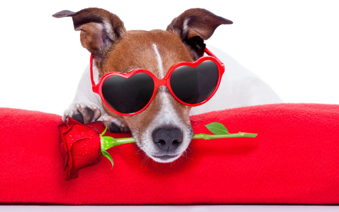 funny pic of dog with rose in mouth