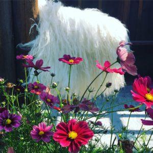 DIY Sheep Crafts   How to Make a Felted Fleece Rug   Shepherd Like A Girl