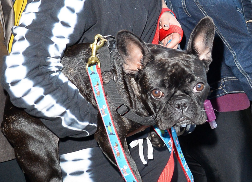 Lady Gaga dog walker Ryan Fischer 'had to have part of his lung removed'