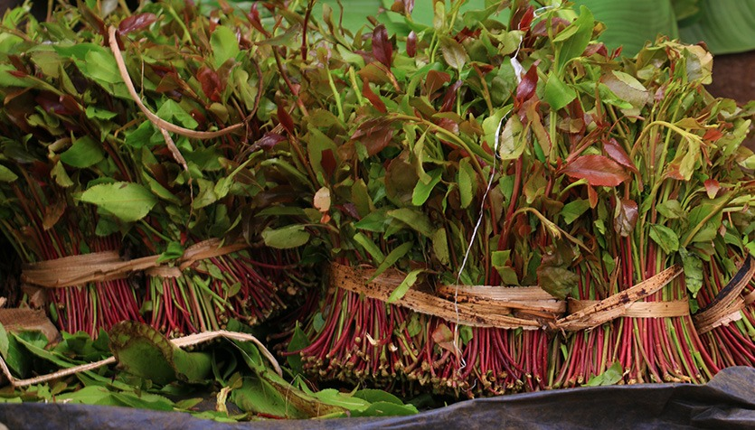 Miraa Sector Will Undergo A Raft Of Changes As KEBS  Seeks To Develop A Code Of Practice For The Industry