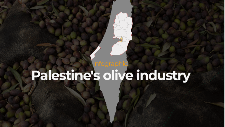 Infographic: Palestine's olive industry