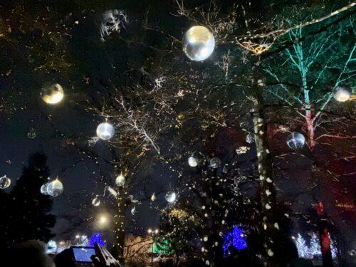 Tree Lights at Morton Arboretum Spark Togetherness