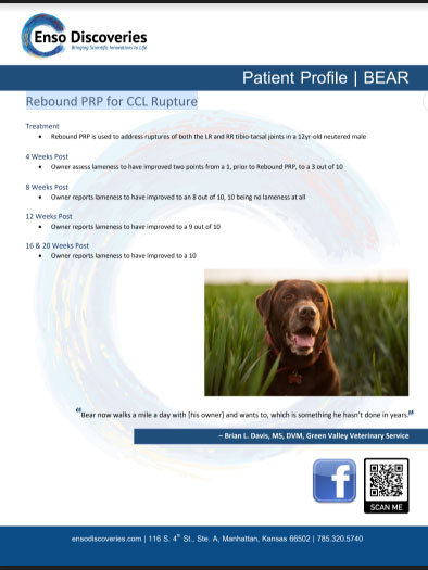 PRP-Case-Study_BEAR