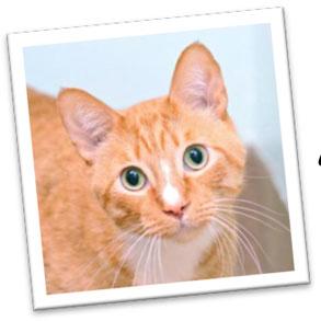 Feline Garfield