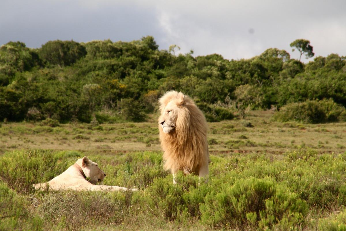 safari-africa-do-sul-1-6