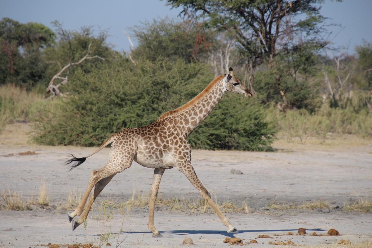 3Botswana