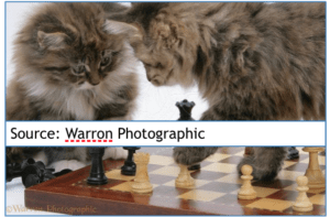Characteristics of Maine Coon