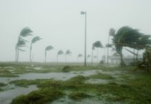 hurricane winds blowing through palm trees