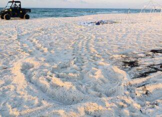 turtle tracks on beach