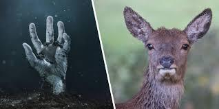 Zombie Deer Disease: Yeah, It's Real