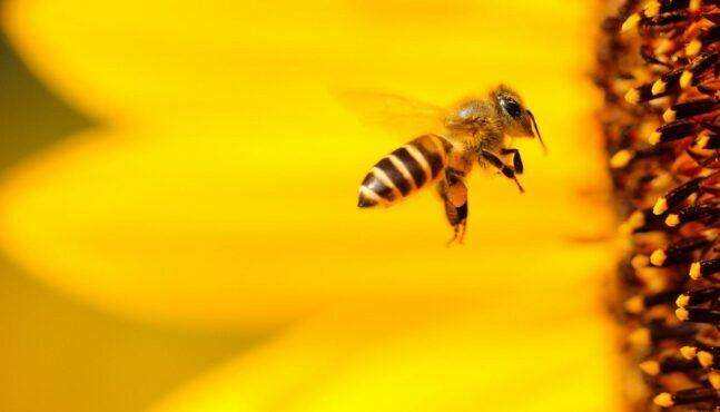 Controversial Herbicide Harming Honeybees?