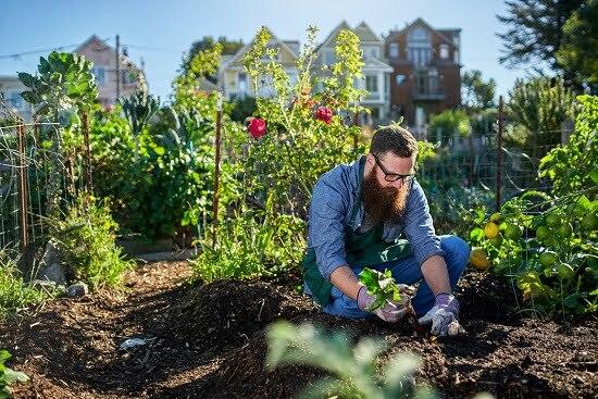 How To Grow A Survival Garden