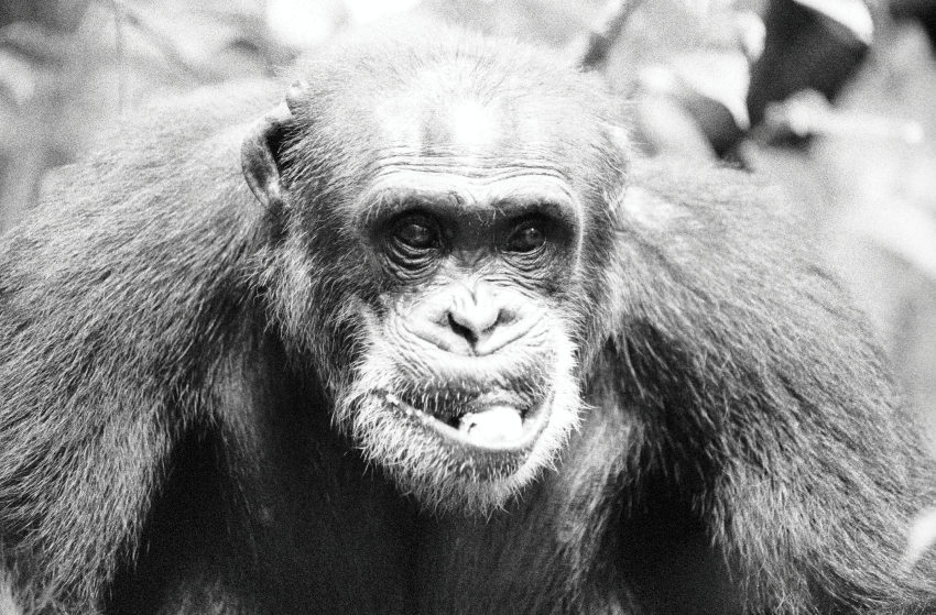 How AIDS Came To Be - Starving Soldier Forced To Hunt Chimps For Food