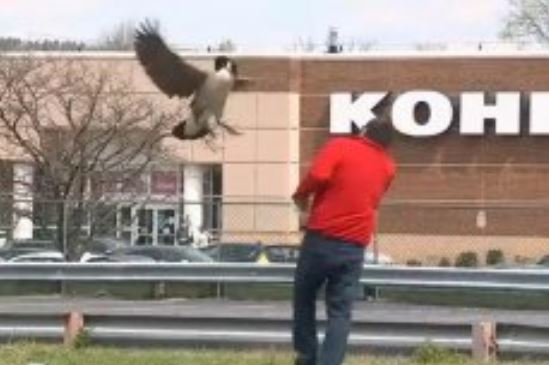 Aggressive Goose Terrorizes New Jersey Diner