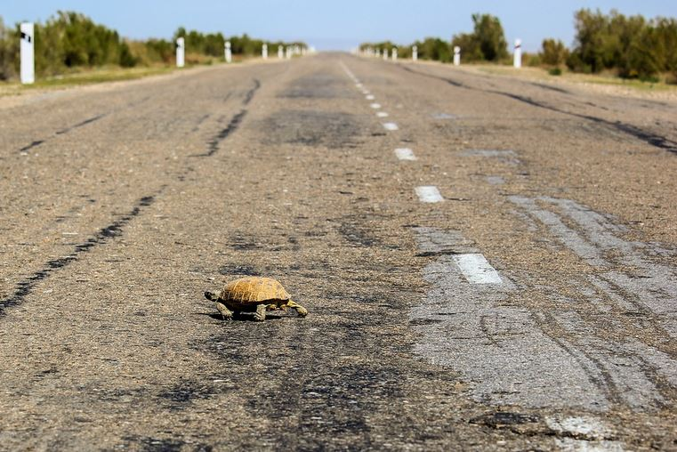Woman Injured After Being Struck in the Head by Flying Turtle on Highway