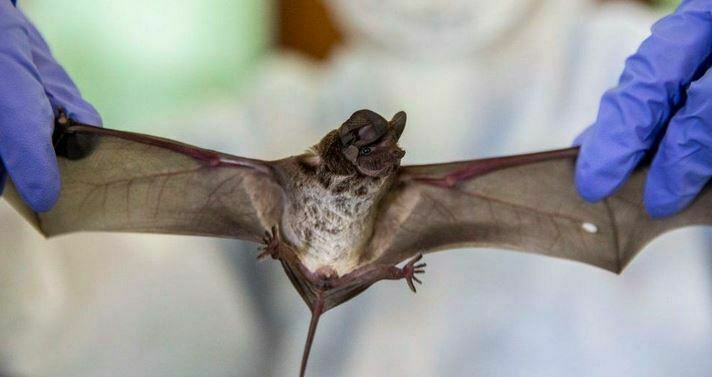 China Tests Thousands of Bats for Covid-19 – Zero Positive
