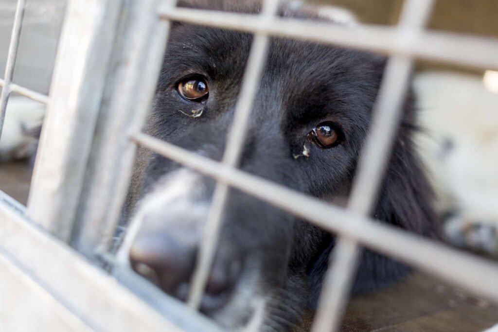YouTube, TikTok Videos Showing Animals Tortured, Buried, Eaten Alive Viewed 5bn Times