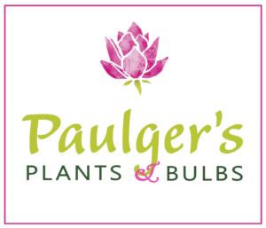 Paulger's 2020 Logo, squarish w box