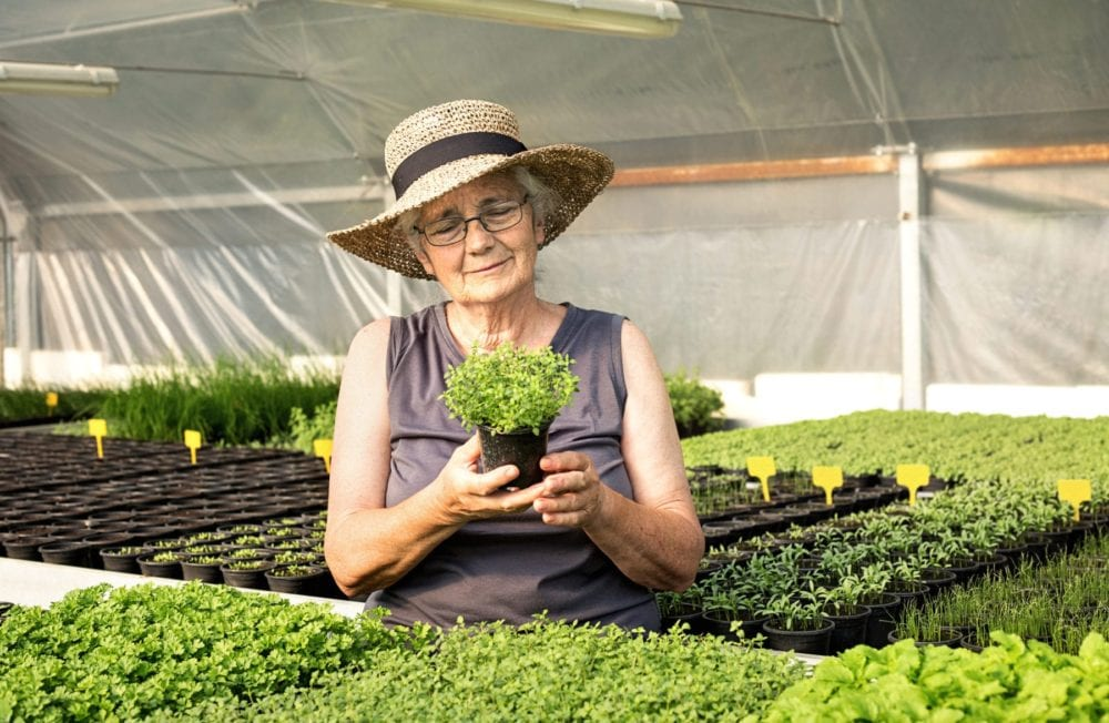 Senior woman holding plant in greenhouse