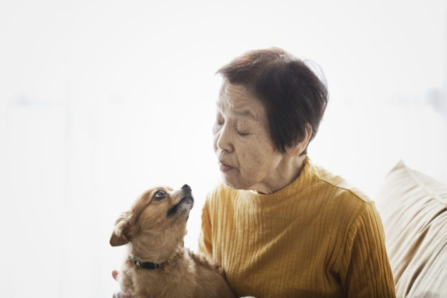 An asian senior woman and dog relaxed at home