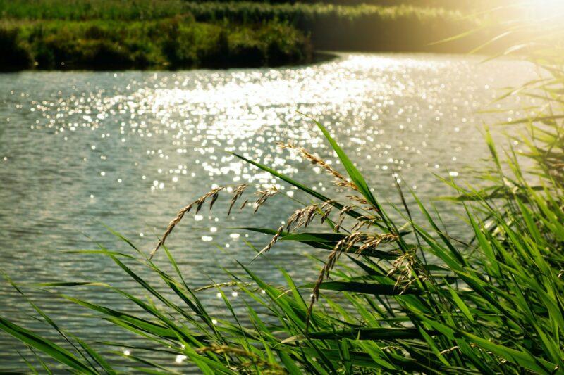 Renewing Waters