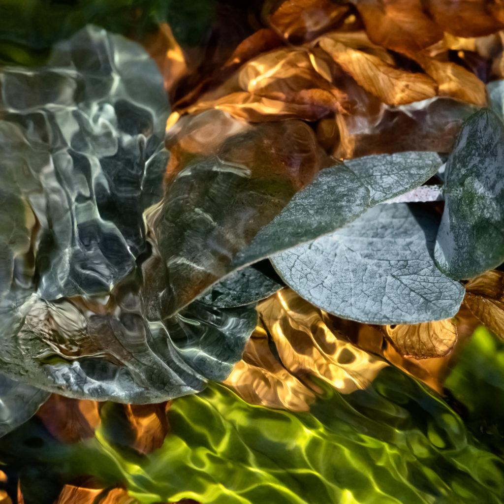 """Eucalyptus Dancing,"" digital photograph by Deb Ehrens"