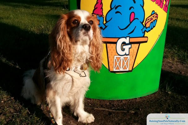 Dog-friendly toledo metro parks and activities.