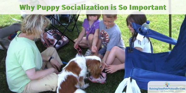 Puppy Training 101   The Importance of Puppy Socialization. Lack of good puppy socialization during a puppy's first 2-6 months of life can seriously increase the possibility of behavioral problems later in life. These behavioral problems can include extreme fear and aggression.