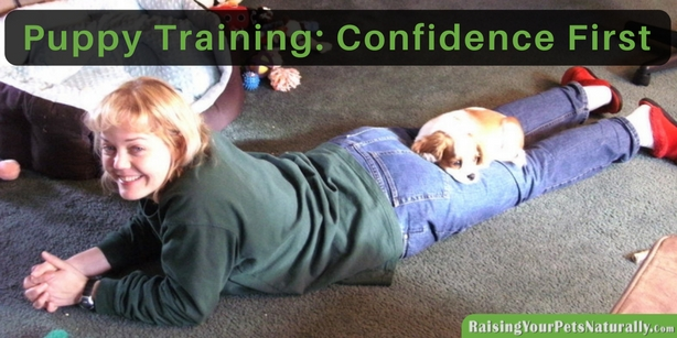 Puppy Training and How To Train a Puppy From Potty Training to Leash Training. What is the First thing to Train Your New Puppy?