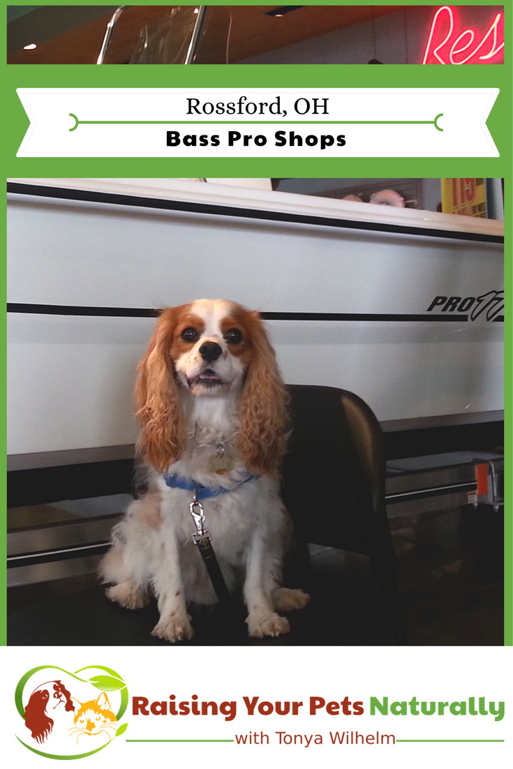 Dog-Friendly Ohio Stores and Activities, Rossford, Ohio If you are looking for an Ohio dog-friendly day trip, check out Bass Pro in Rossford, Ohio. #raisingyourpetsnaturally #dogfriendly #dogfriendlyohio #basspro #bassprorossford #dogfriendlybasspro #dogfriendlystores