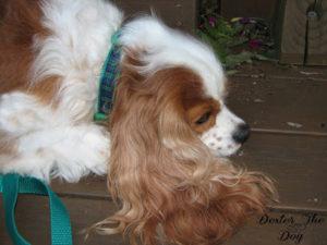 dogcollar3