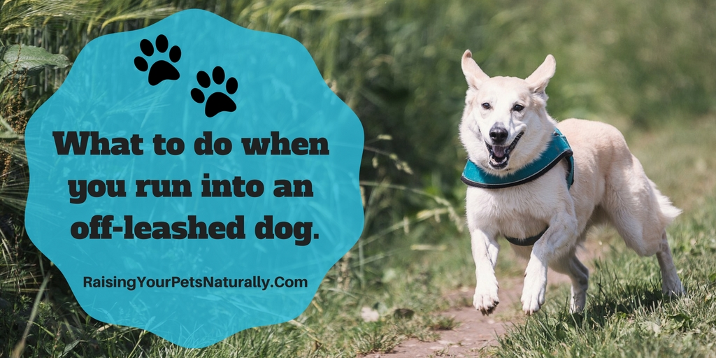 How to protect yourself and your dog if you encounter an off-leashed dog. I'm saddened at how often this situation occurs. Learn more by clicking through. #raisingyourpetsnaturally