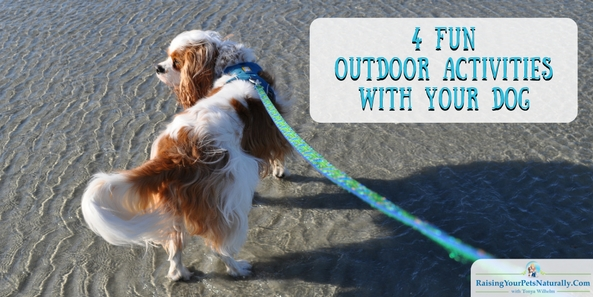 4 Fun Things To Do with Your Dog Outside ON LEASH! Fun things to do with your dog outside on his leash. #raisingyourpetsnaturally