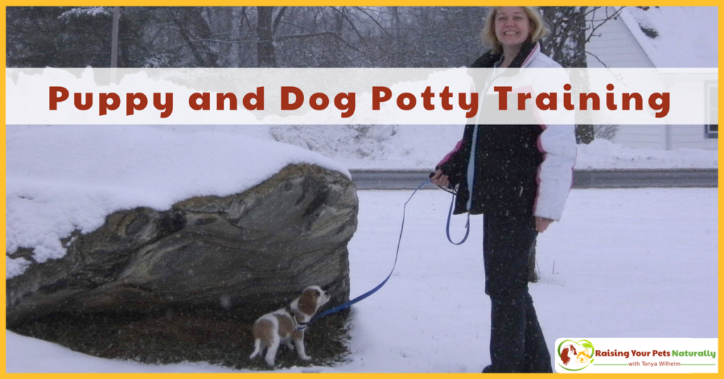 House-training a puppy and dog potty training tips. Read more on house training a puppy or dog. #raisingyourpetsnaturally