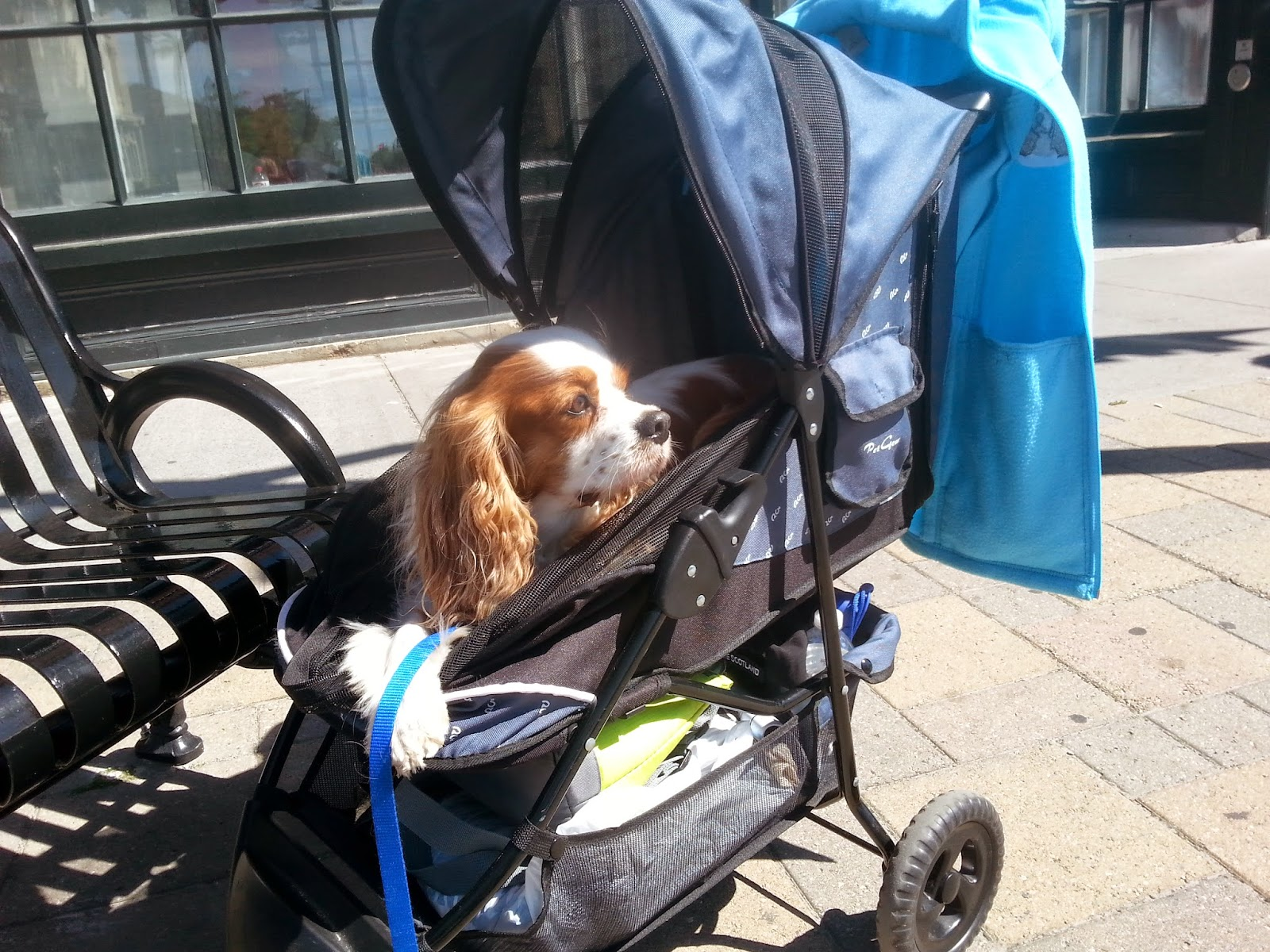 Find the best dog and pet strollers