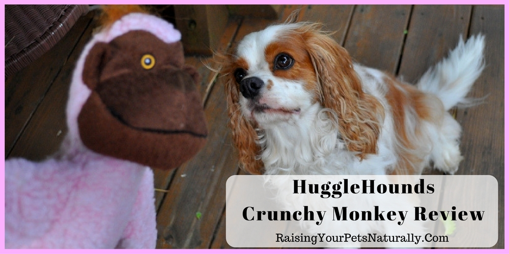 HuggleHounds Crunchy Monkey Dog Toy Review. Are you looking for a fun and durable dog toy? Check out this funny monkey.
