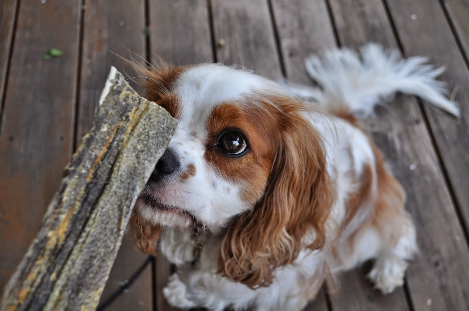 Honest Kitchen Dog Treat Reviews