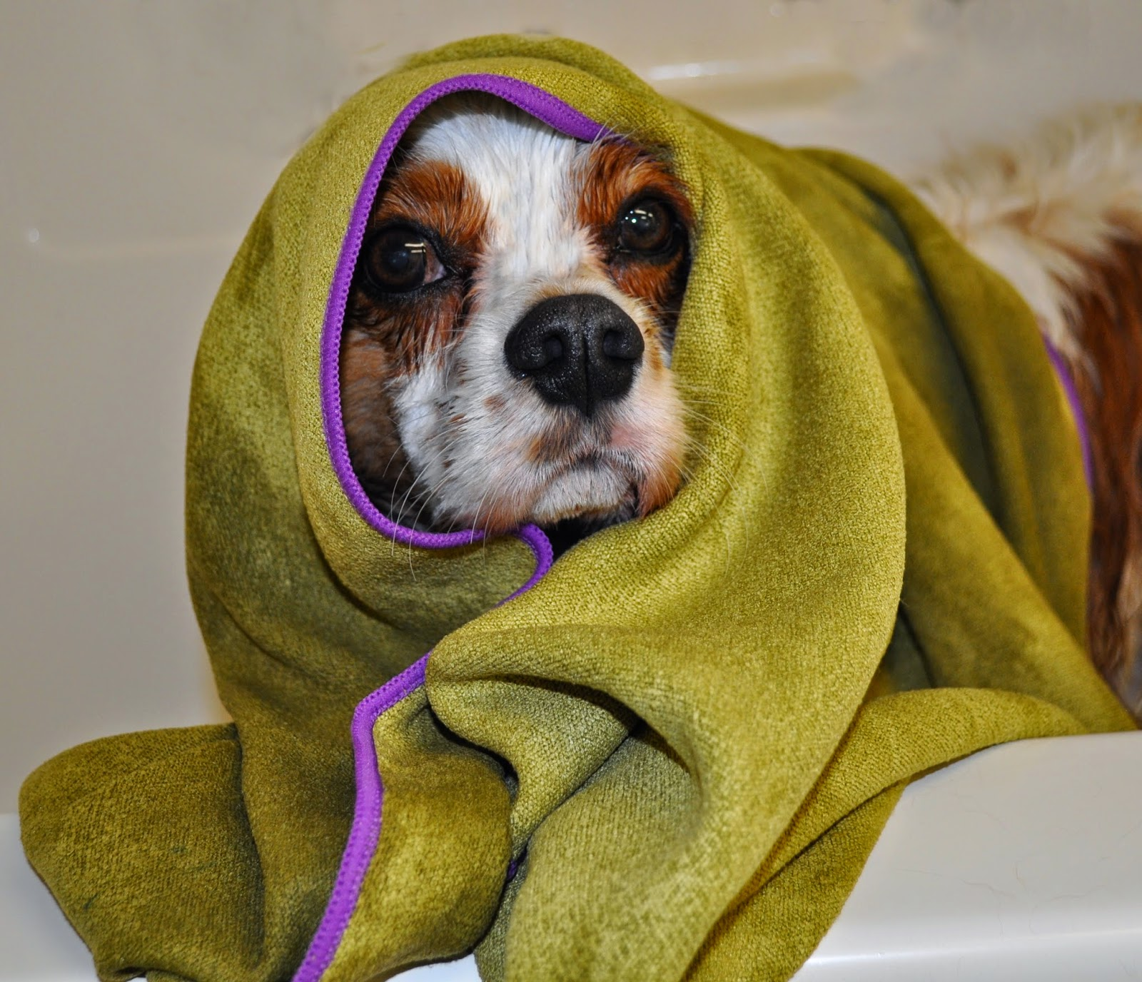 Mugzy's Mutt Dog Towel Review