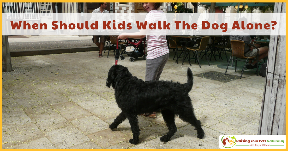 Kids and pets, dogs and kids. I love them both! But, when it comes to our children and dogs we do need to be aware and keep both safe. At what age should a kid be able to walk the dog alone? Read more. #raisingyourpetsnaturally