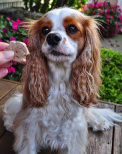 Healthy Dog Treat Reviews