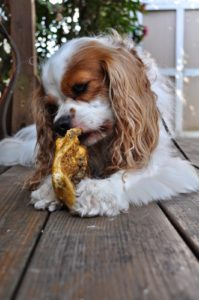Safe and Natural Dog Chews