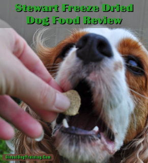 Raw, Healthy Dog Food