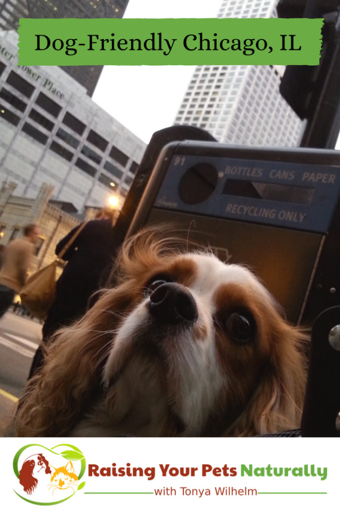 Dog-Friendly Vacations: Dog-Friendly Chicago shopping stores and restaurants that allow dogs. Don't miss out on all the fun dog-friendly activities Chicago has to offer. Click to join the fun. #raisingyourpetsnaturally