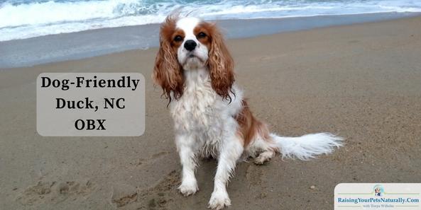 Dog-Friendly Vacations: Dog-Friendly Outer Banks: Duck, North Carolina Dog-Friendly Duck, NC