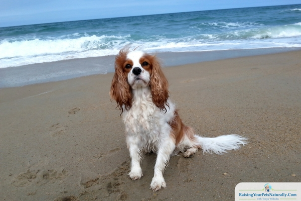 Outer Banks dog-friendly beaches