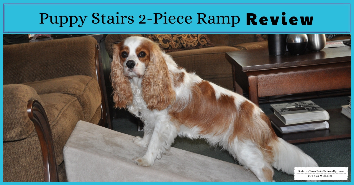 Best dog stairs and ramps for a bed