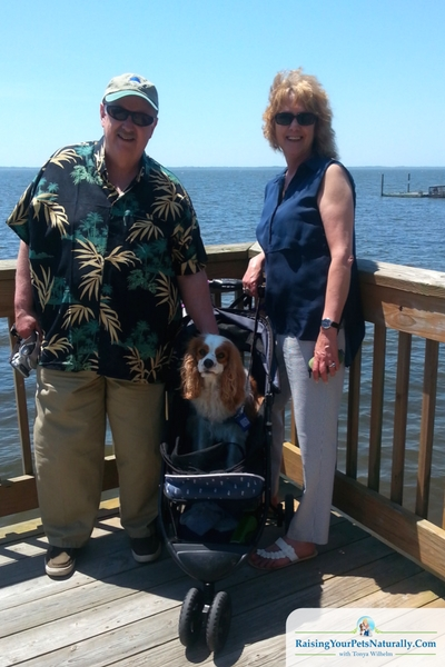 """That was just one of our dog-friendly trips to Duck, NC! Another day we headed to The Waterfront Shops. They too were pretty dog-friendly and accommodating. We just continued to ask if Dexter could come in and they pretty much always said, """"Yes."""" The shops were situated so that the walking was on a boardwalk facing the shores of The Currituck Sound and meets up to the Duck Town Boardwalk."""