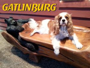 dog friendly gatlinburg, Tennessee