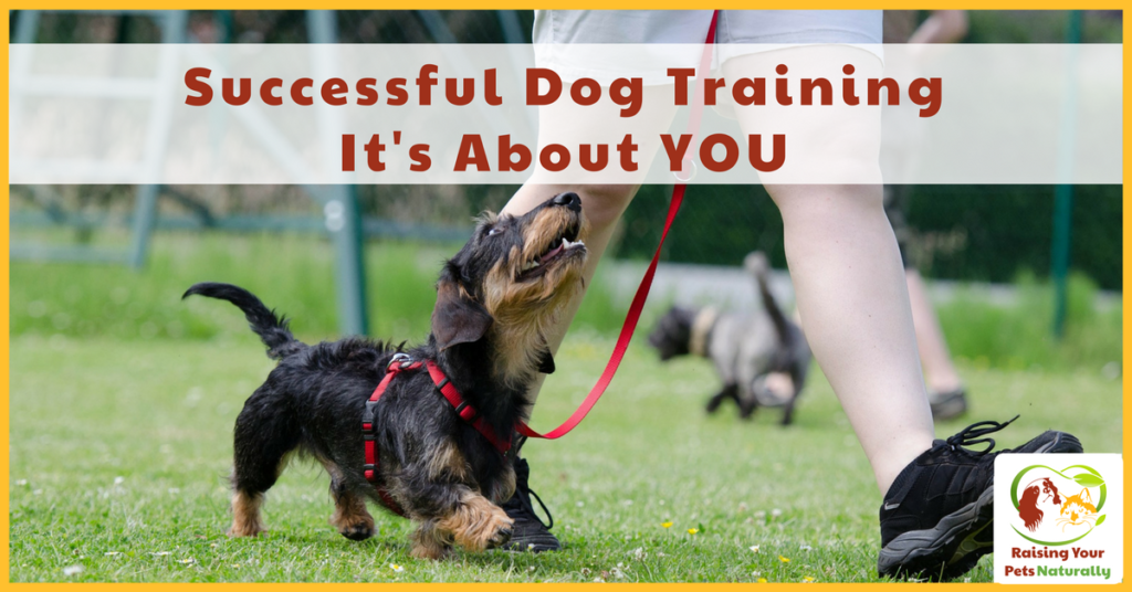 Dog Training and Dog Trainers are Not The End Result It's about what you, the owner do outside of your dog training lessons that will determine your dog's success. #raisingyourpetsnaturally