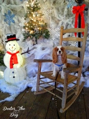 Outdoor Winter Games For Dogs